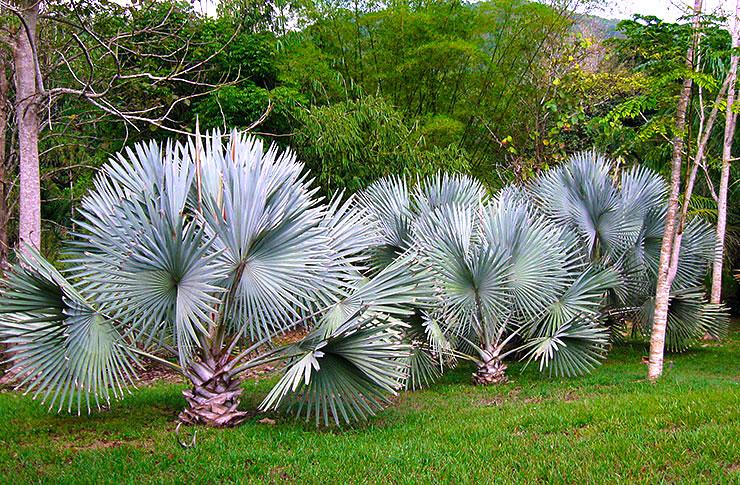Watch Bismark palms on parade