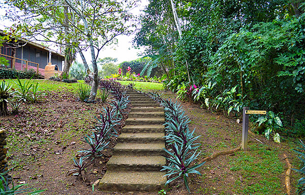 Steps leading up to Visitors' Center from the Orchid House