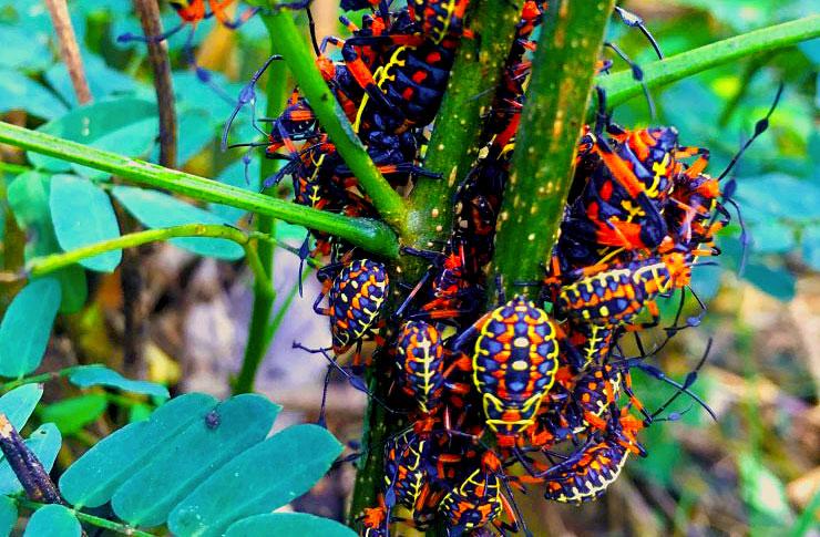 Beetle Gathering