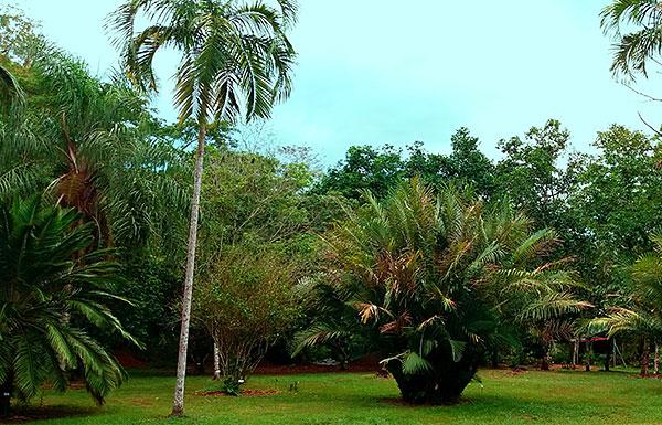 palmSlide5