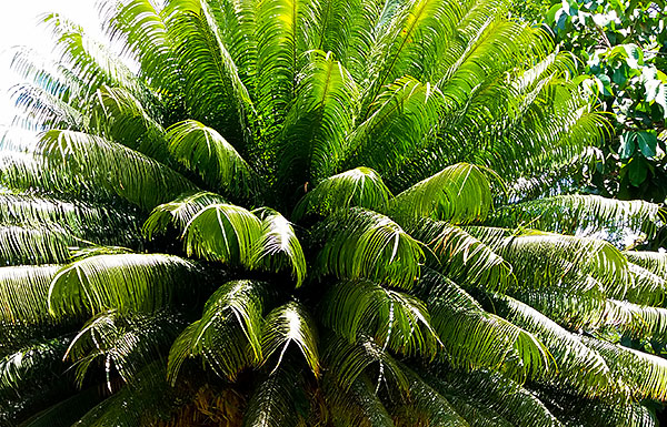 palmSlide8