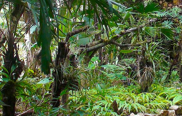 Along the Rainforest Trail