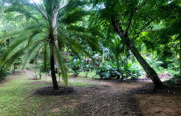 Palm area - View 1